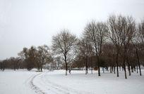 美丽的树林雪景