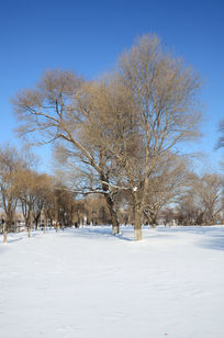 美丽的树木雪景