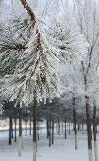 美丽树枝上的白雪