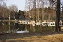 青岛小西湖风景