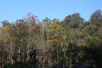 泰国热带树林