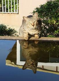 小花猫和水中倒影
