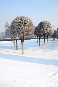 雪地上美丽的小树