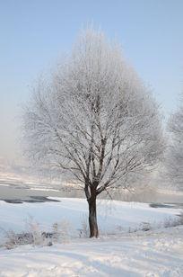 江边美丽的树挂