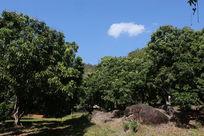 蓝天白云和雨林