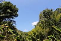 蓝天白云下的热带雨林