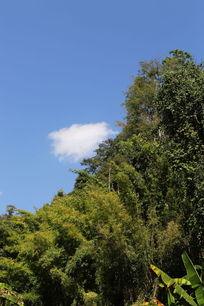 蓝天白云下的雨林