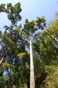 清迈的热带树林