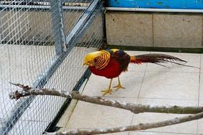 观赏色彩鸟