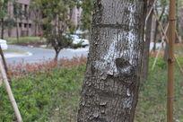 树干纹理树皮