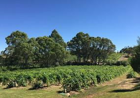 澳大利亚葡萄庄园