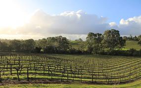 澳洲葡萄酒庄园