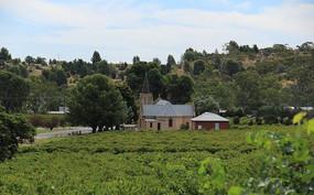 茂盛的葡萄庄园