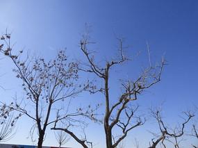 干枯的树木图片