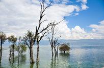 清澈湖边生长的几株老树