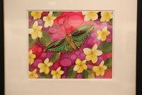 澳大利亚手绘画蝴蝶