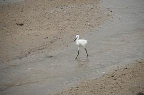 白色的鸟类