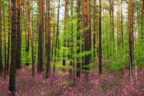 山花怒放大森林