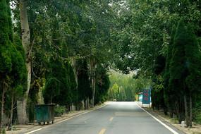 绿树成荫的柏油马路