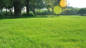 阳光下的草坪