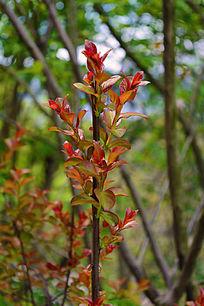 红绿的叶子