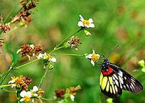 蝴蝶的美摄影