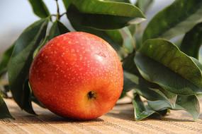 绿叶与红苹果