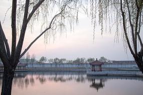 湖边柳树小桥
