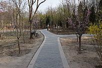 森林公园小路摄影图片