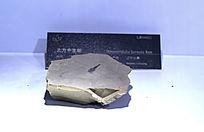 北方中生蜓化石