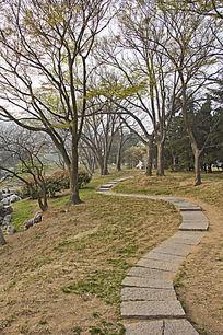 公园的小路风景