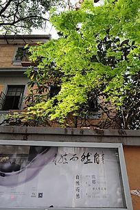 上海特色绿荫公寓式建筑