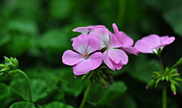 春天的粉色小花