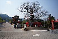 灵光寺许愿树