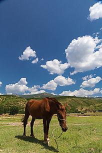 阳光下的骏马