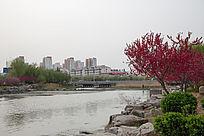 沂河边的建筑