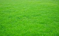 一片绿色草坪