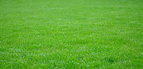 一片绿油油的草坪