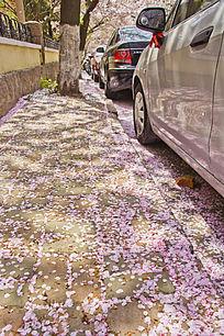 地上的樱花花瓣