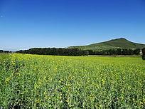 绿色草原摄影