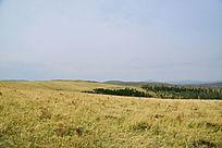 优美草原景点
