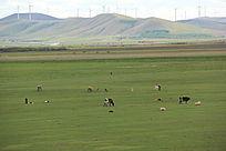 优美草原景区