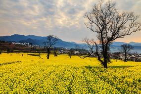 春天的卢村