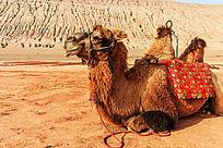 火焰山卧着的骆驼