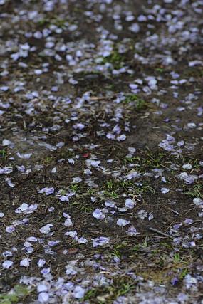 散落在地上的紫色花瓣背景