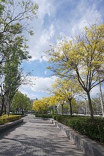 城市中的林荫小道