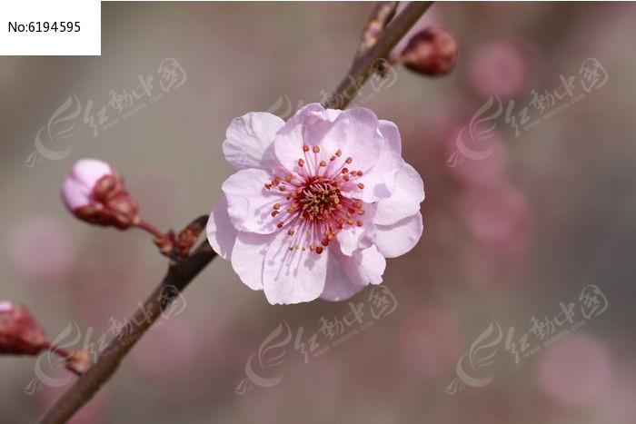 春季里绽放的美丽花朵图片