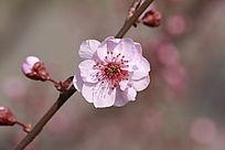 春季里绽放的美丽花朵