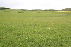 呼伦贝尔草原风景