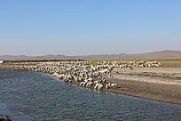 内蒙古羊群美景